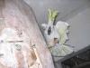 Sárgabóbitás kakadu fészkét védi